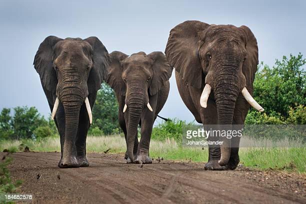 Trois grandes éléphants sur un chemin de terre