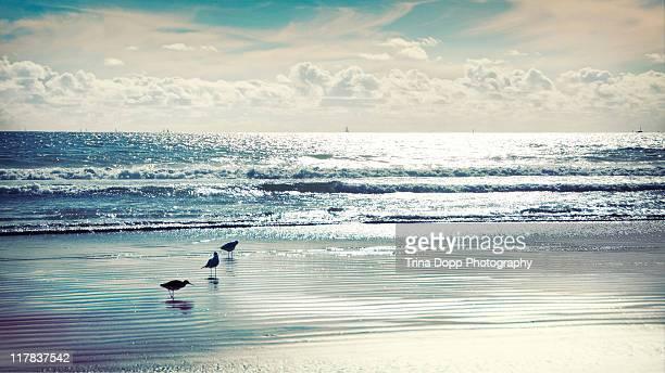 Three Birds on beach