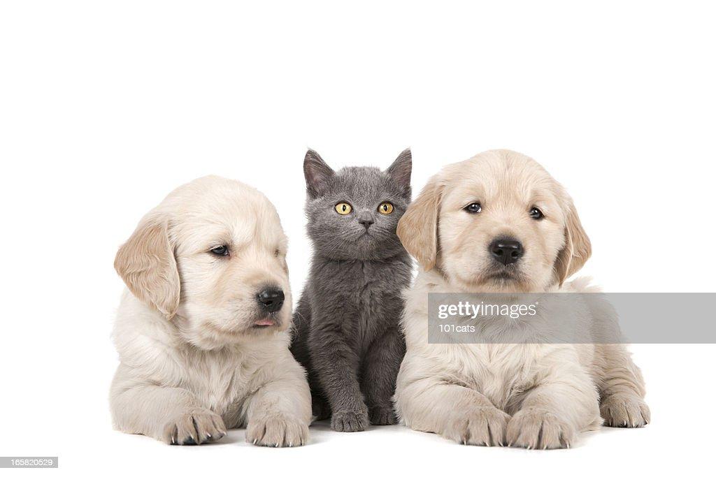 three buddies : Stock Photo