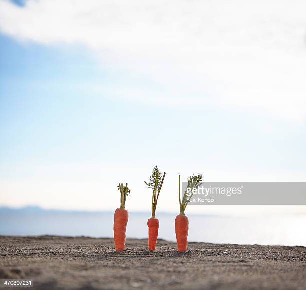 Three carrots on a beach.