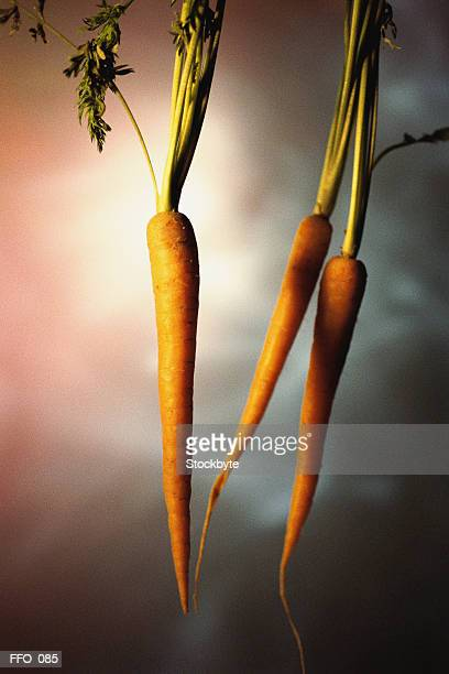 Three carrots with tops