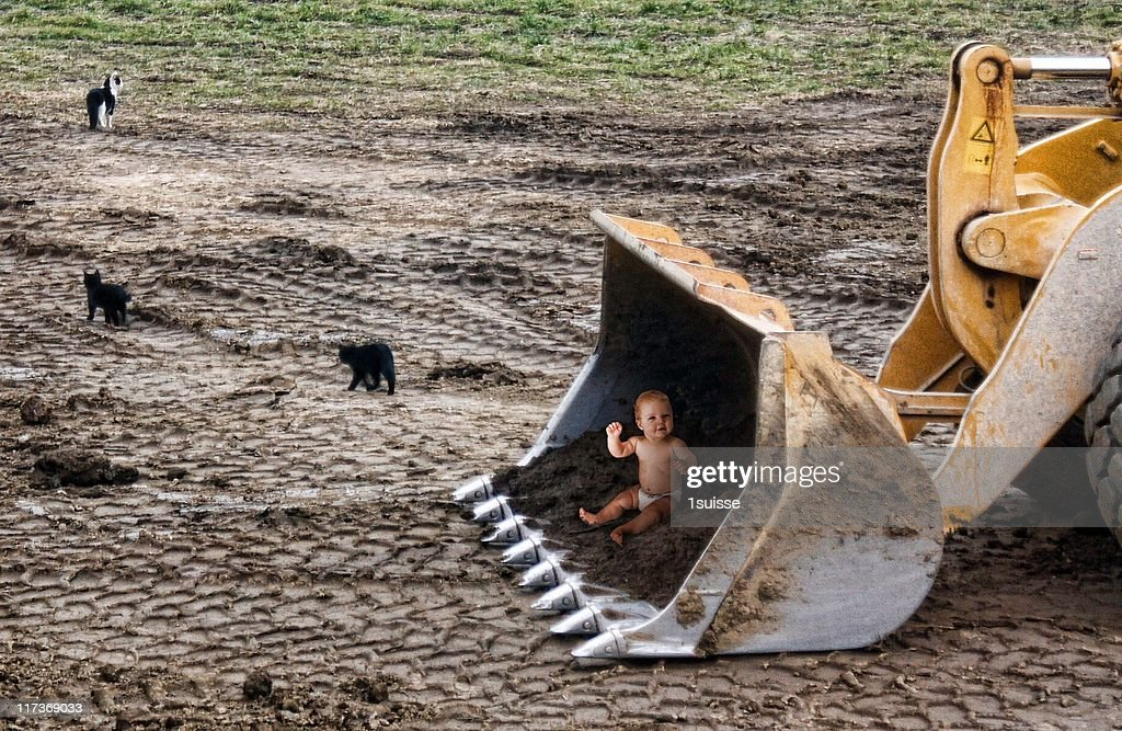 Three cats and baby in excavator : Stock Photo