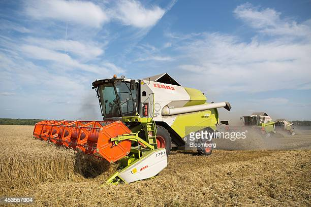 Three Class KGaA combine harvesters cut wheat during the summer harvest on the OOO Barmino farm enterprise in Vargany near Nizhny Novgorod Russia on...