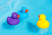 Three colorful rubber ducks, yellow, blue and purple, swimming in the water in a paddling pool