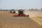Three combine harvesters manufactured by Claas KGaA drive through a field of wheat during the summer harvest on a farm operated by Kuban Agroholding...