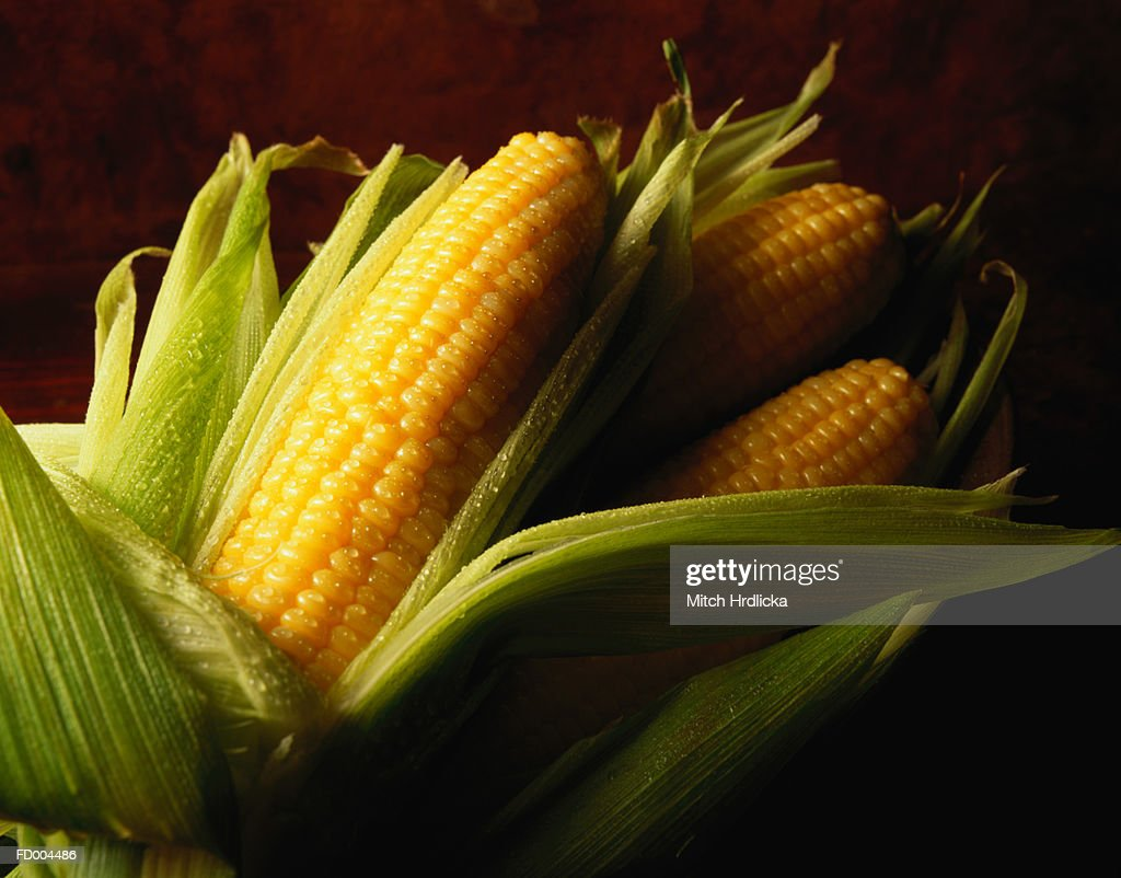 Three Corn Cobs : Stock Photo