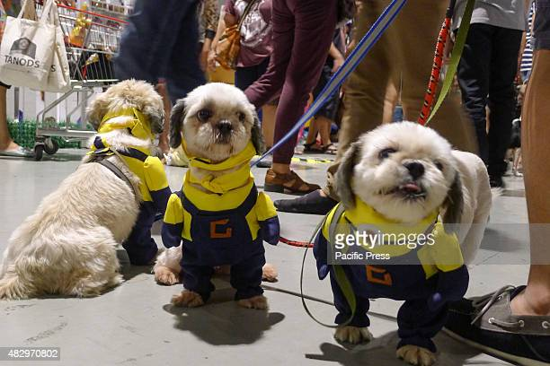 Three cute dogs with identical yellow costumes catches attention at the trade fair Different breeds of dogs and cats Dog breeders Pet lovers unite...