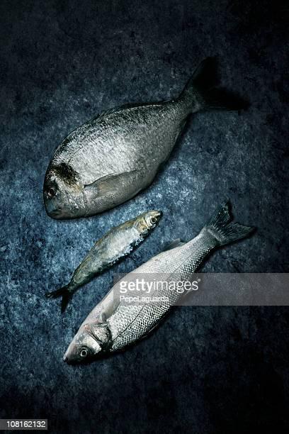 Tres peces muertos Lying on Grunge fondo