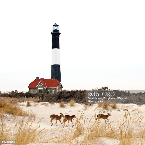 Three deer in front of the Fire Island Lighthouse