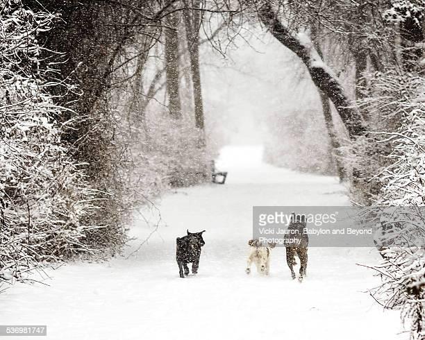 Three Dogs Enjoying the Snow on Long Island