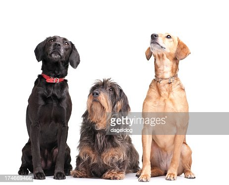 Three dogs looking up representing best friends