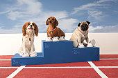 Three dogs on Winners Podium