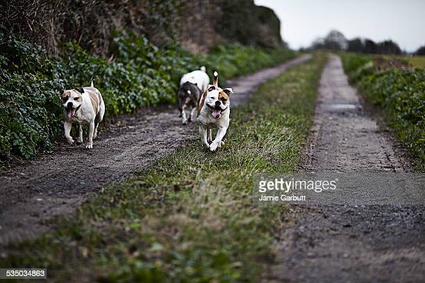 Three dogs out on a walk on a winters day