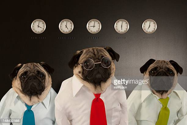 Three dogs pose as business experts