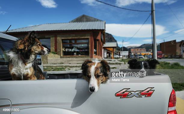 Three dogs sit in the back of a pickup truck in Los Glaciares National Park part of the Southern Patagonian Ice Field on December 2 2015 in Santa...