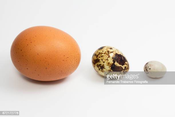 Three eggs of different sizes big, medium and small: hen, quail and canary