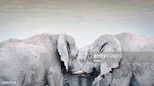 Três elefantes a socialização em