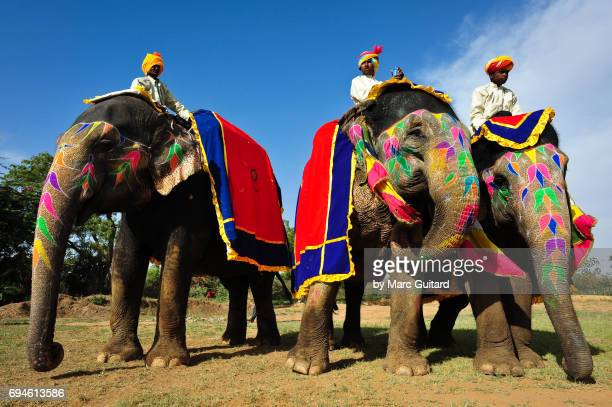 Three elephants with their riders at the Elephant Festival, Jaipur Elephant Festival, Rajasthan, India