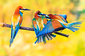 three exotic colored birds biting on the branch, wildlife, a unique moment