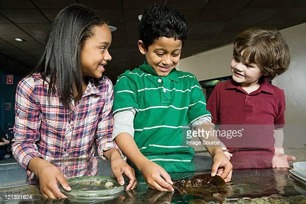 Drei Freunde im aquarium, junge holding Seetang