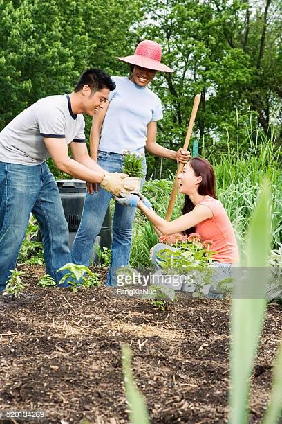 Three friends gardening in community garden