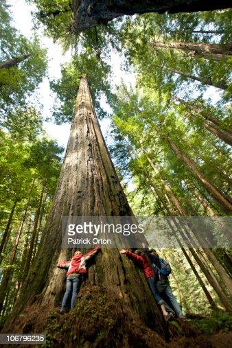 Three friends hug a massive redwood in California.