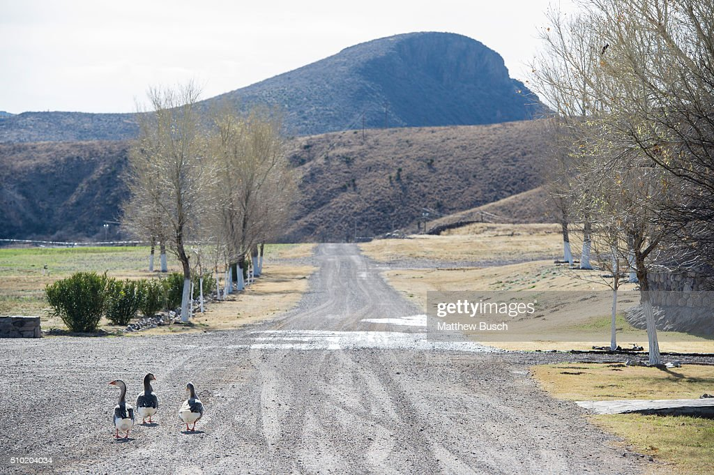 Three geese walk the grounds at Cibolo Creek Ranch where Supreme Court Justice Antonin Scalia spent time the night before he was found dead in his room at the West Texas Resort ranch that stretches over 30,000 acres, February 14 , 2016 in Shafter, Texas. Justice Scalia was 79.