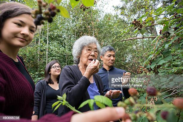 Three Generation Family Picking and Eating Wild Blackberries in Woods
