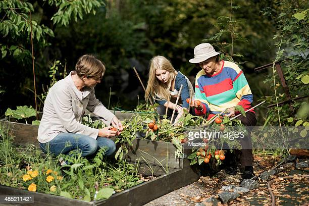 Three generation females gardening in yard