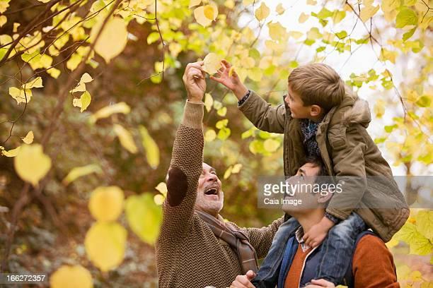 Three generations of men admiring leaves