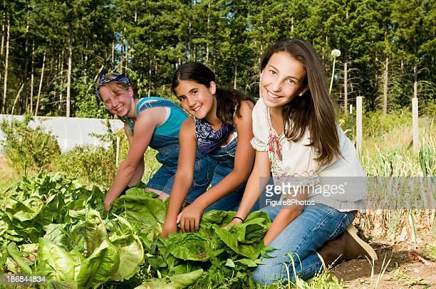 Three Girls Harvesting