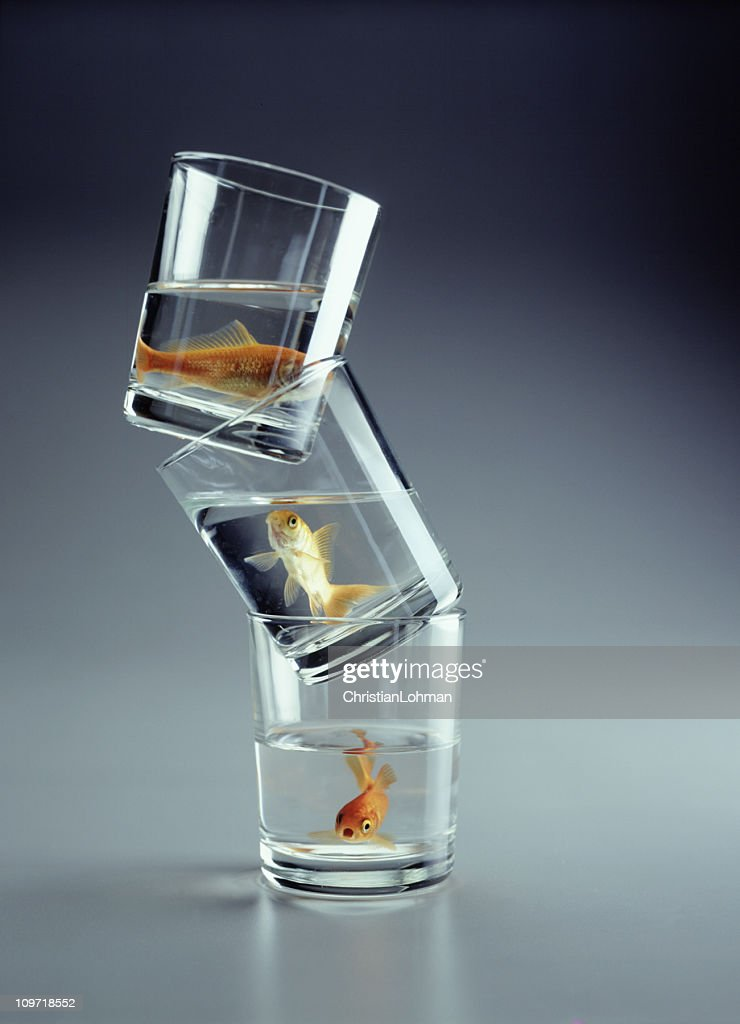 Three Goldfish in Stacked Glass Cups : Stock Photo