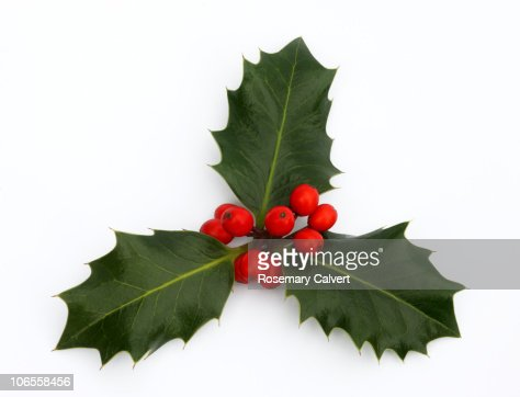 Three holly leaves with red berries. : Stock Photo