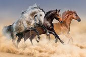 Three horses run gallop in dust