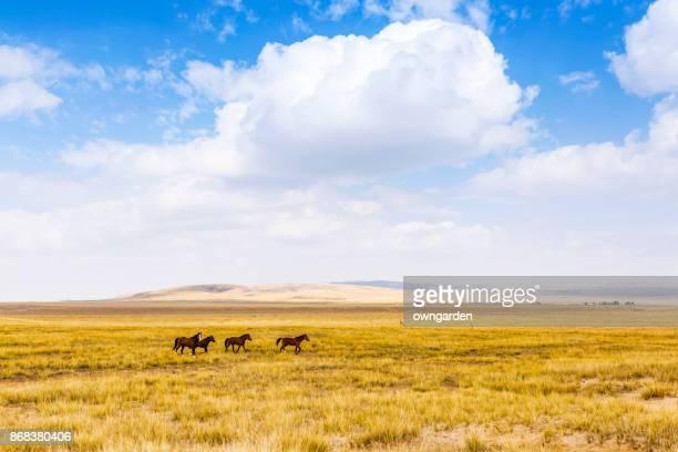 Three horses were running