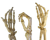 human hands skeleton isolated on white background