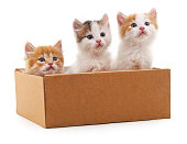 Three kittens in a box isolated on white background.