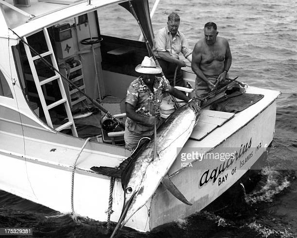 Three men admire a striped marlin lying on the stern of the Aquarius fishing boat in Bay of Islands New Zealand circa 1970