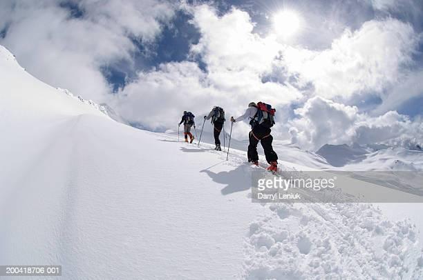 Three men backcountry skiing, rear view