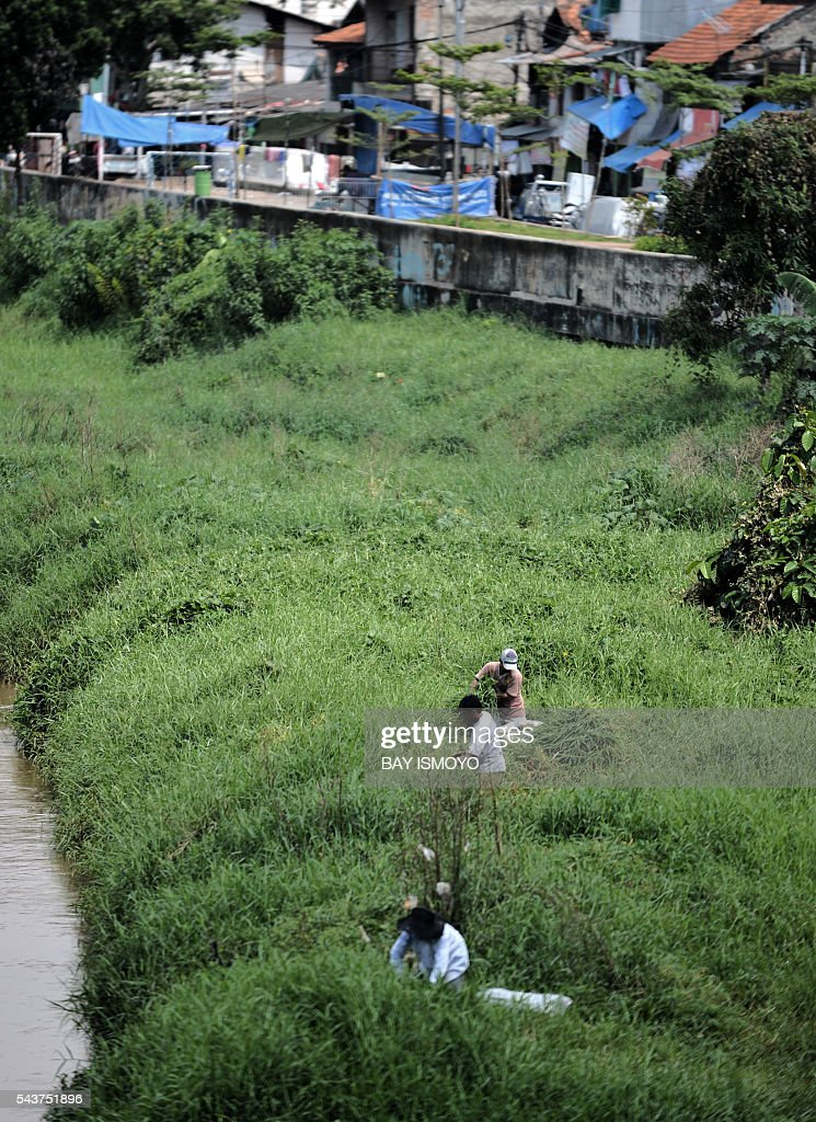Three men collect grass to feed their livestock from a river bank in Jakarta on June 30, 2016. Indonesia launched a tax amnesty in a bid to give Southeast Asias top economy a multibillion-dollar boost, defying criticism the move will let evaders off the hook. / AFP / BAY