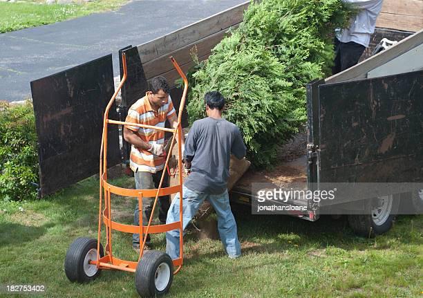 Three men unloading a tree off a truck