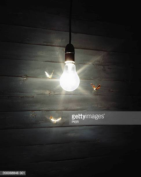 Three moths flying around illuminated light bulb