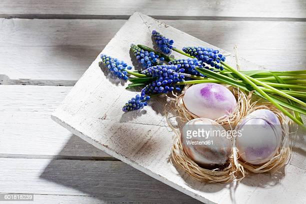 Three nests with Easter eggs and grape hyacinths on wooden bowl