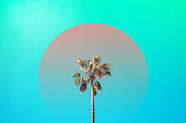 Three nice palm trees against blue sunny sky. Creative summer concept.