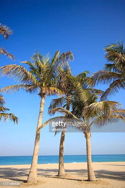 Three palm trees on an empty beach