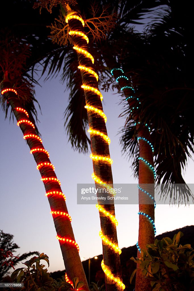 three palm trees wrapped with christmas lights stock photo - Palm Tree With Christmas Lights