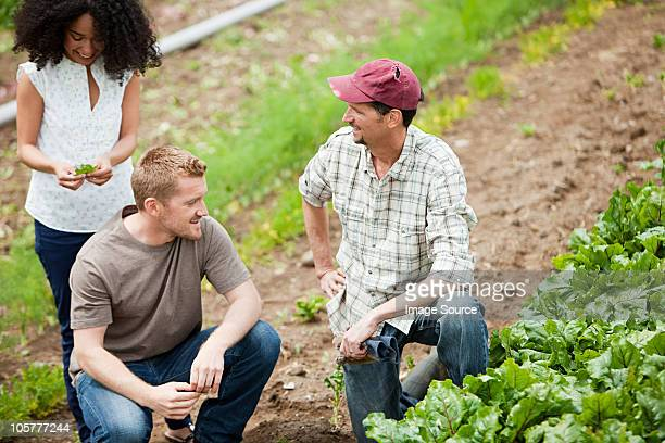 Trois personnes à la recherche de culture à base de légume