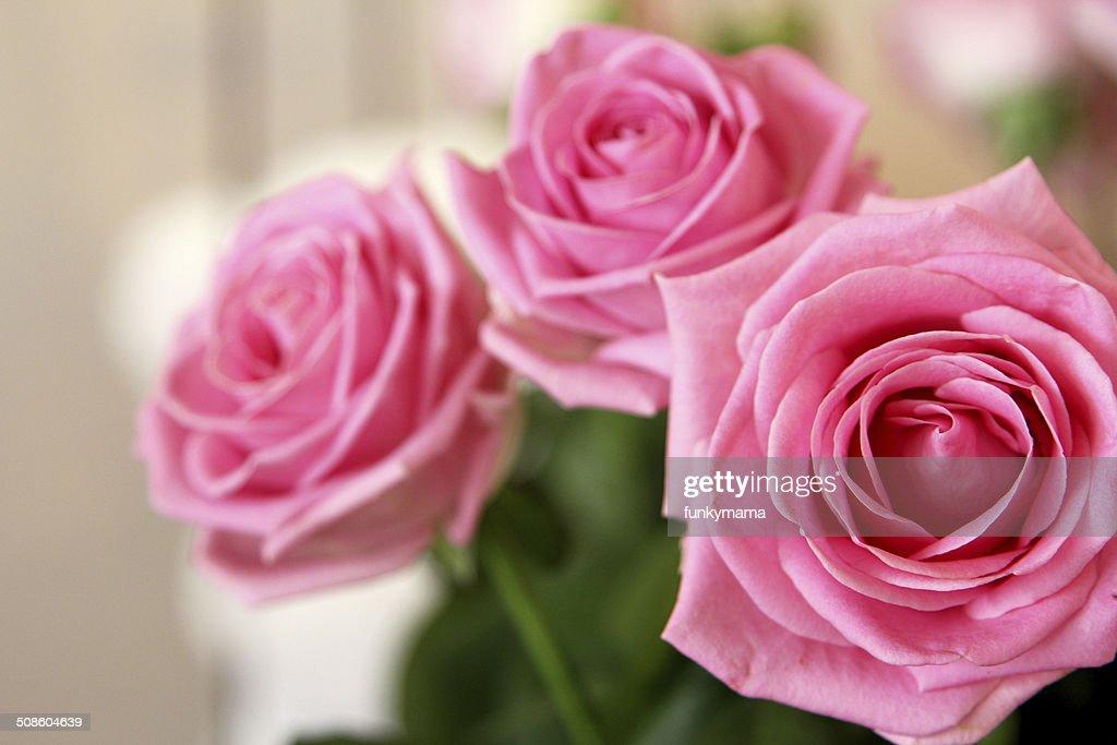 Três rosas cor de rosa : Foto de stock