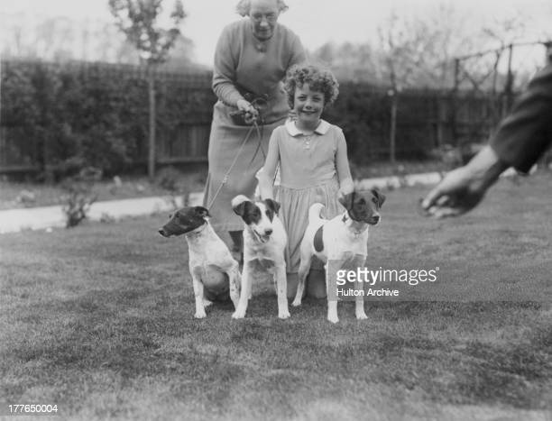 Three prizewinning fox terriers at the Oneway Kennels in Surbiton Surrey 13th May 1936 The dogs were to be shown at the Fox Terrier Club show at...