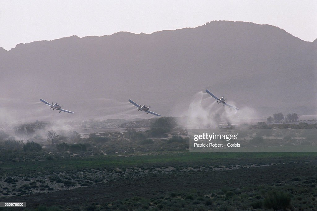 Three propeller airplanes spray pesticide over the land after a swarm of desert locusts invaded the Lagahout region of Algeria. The invasion of locusts in Algeria, and throughout Africa, drastically reduced food production, forcing the government to provide food aid programs and emergency assistance to rural communities.